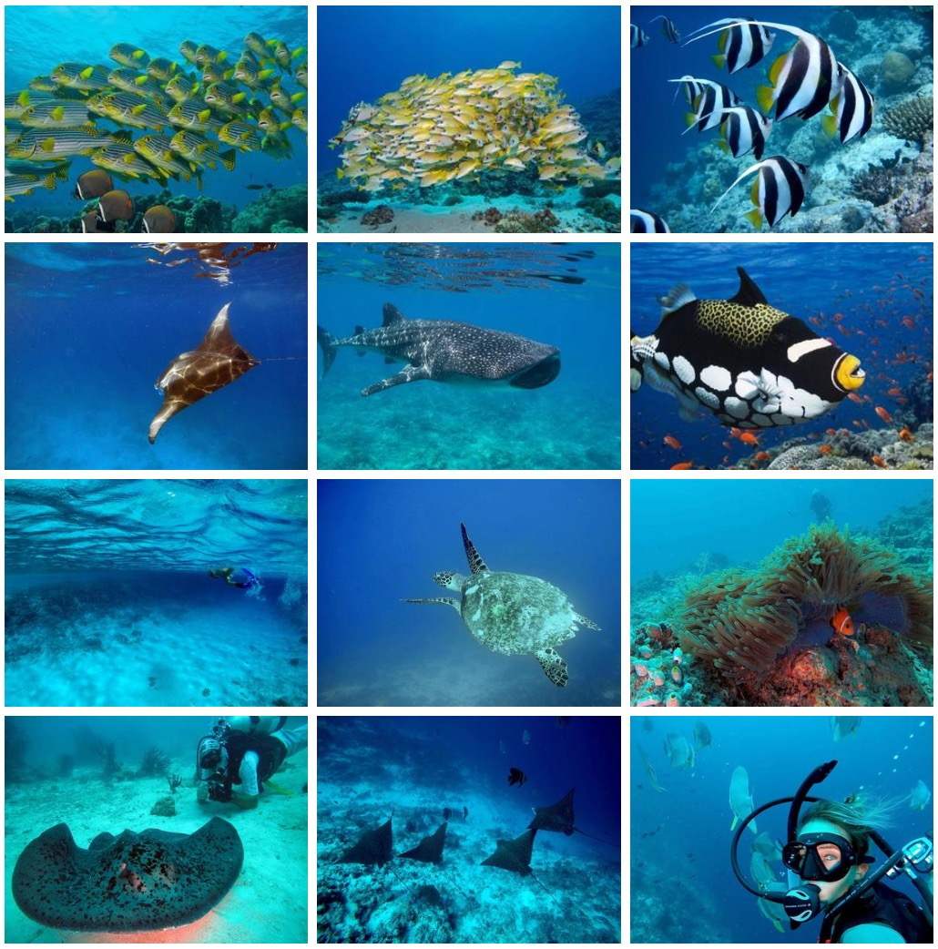 Diving & Snorkeling in the Maldives | Elysia Yacht Charters Maldives
