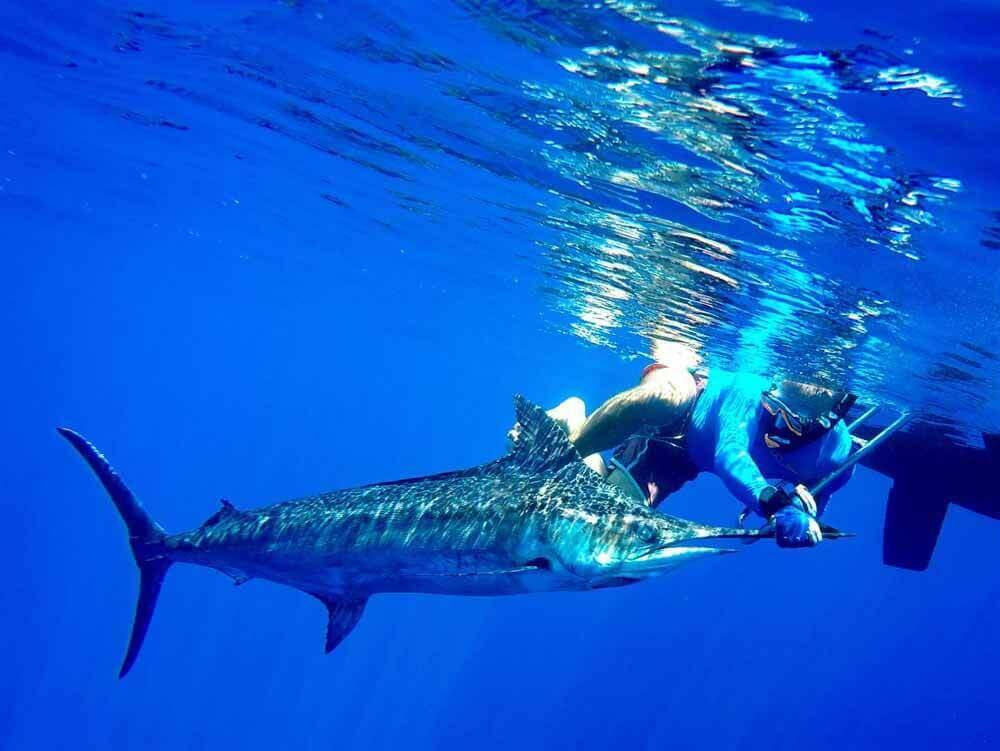 Maldives Fishing Charter - Catching Sailfish aboard a Sailboat - Elysia Charters