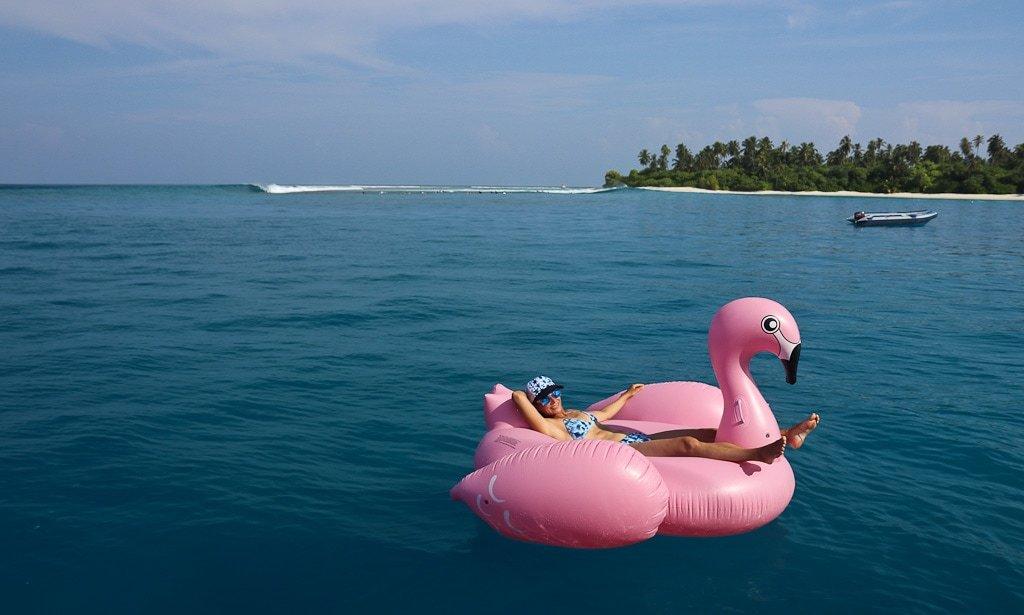 Pink flamingo floating near a Maldives surf spot | Elysia Surf Charters Maldives