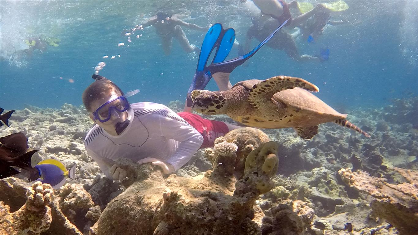 Snorkeling in the Maldives with turtles and tropical fish | Elysia Charters | Sail Surf Maldives